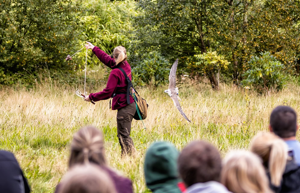 Muncaster Hawk and Owl Centre flying display