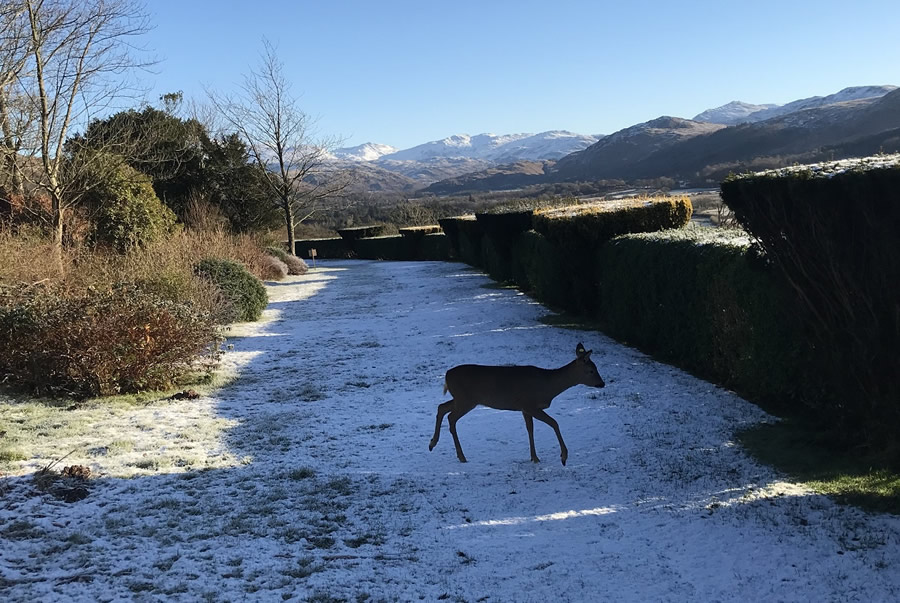 Heard about Twiggy, the orphaned roe deer fawn?