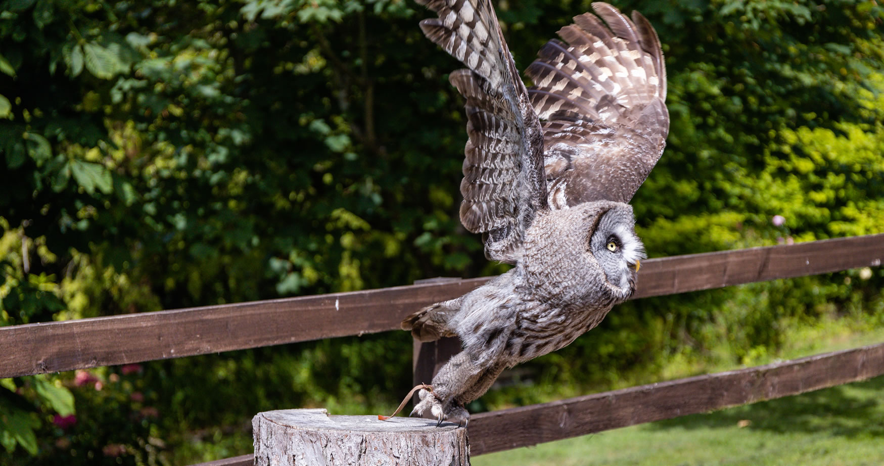 Hawk & Owl Centre