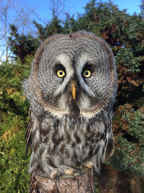 Muncaster Castle Owl Experiences