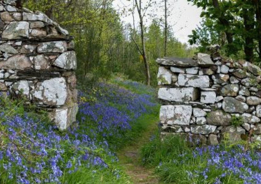 bluebell-woods-13-may16-ME-1200x-400x267