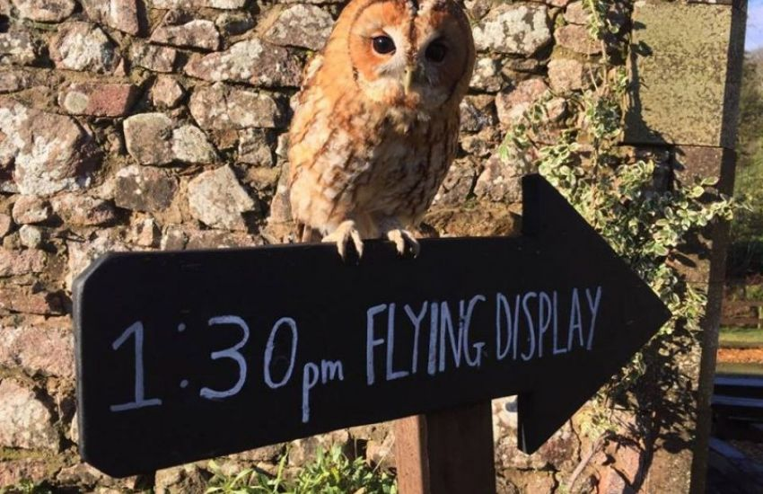 tawny-and-sign